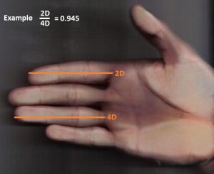 Hand_zur_Abmessung_2D4D
