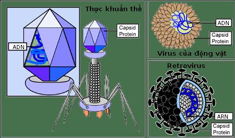 Virus-types-vi